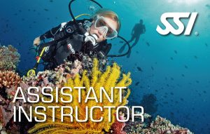 Assistant Instructor (AI)