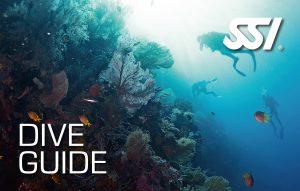 Dive Guide (DG)